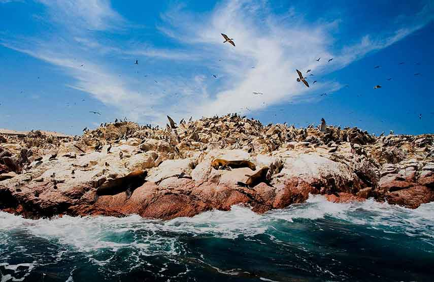 Islas-Ballestas